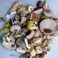 Assorted wild mushrooms.