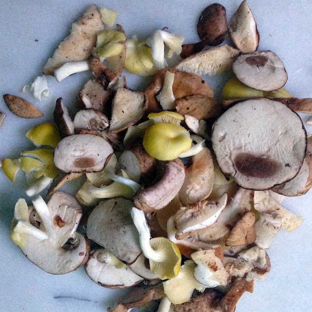 Trimmings from assorted wild mushrooms.