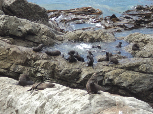 Saturday Beach: Seals on the Rocks, Kaikoura