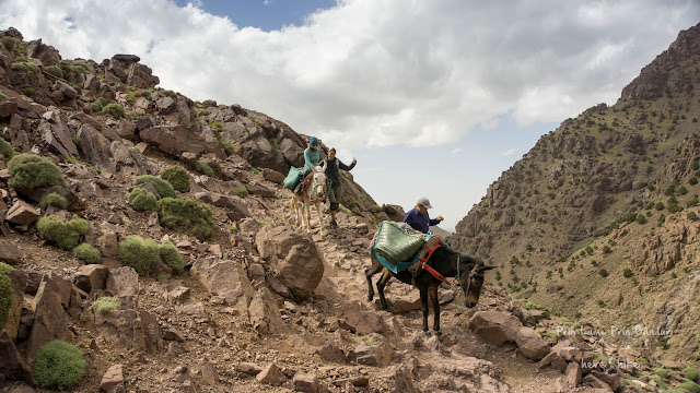 to toubkal peak atlas mountains mule