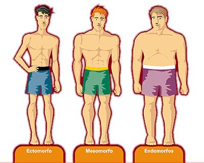 Tipo somático: Ectomorfo, endomorfo y mesomorfo