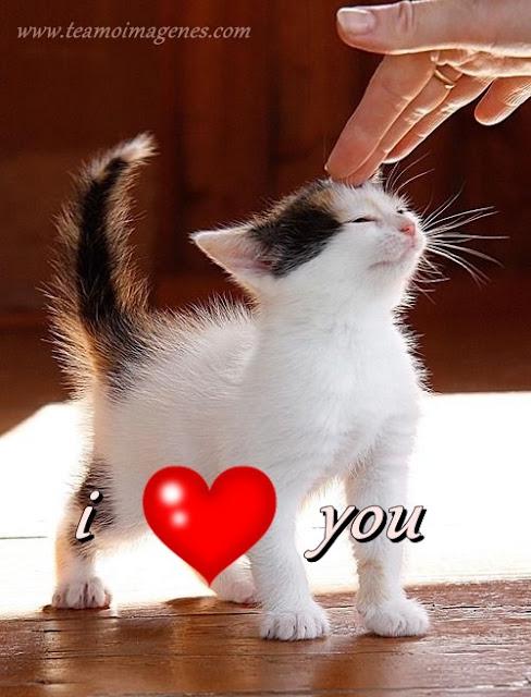 imagen de gatito diciendo te amo