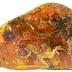 Fosil Bayi Burung dari Era Dinosaurus Ditemukan dalam Resin Berusia 99 Juta Tahun