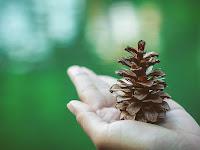5 Contoh Puisi Tentang Lingkunganku