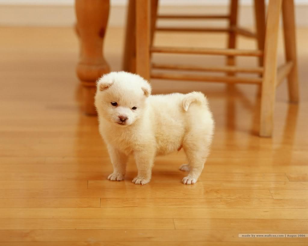 Gambar Anak Anjing Yang Lucu Dan Imut