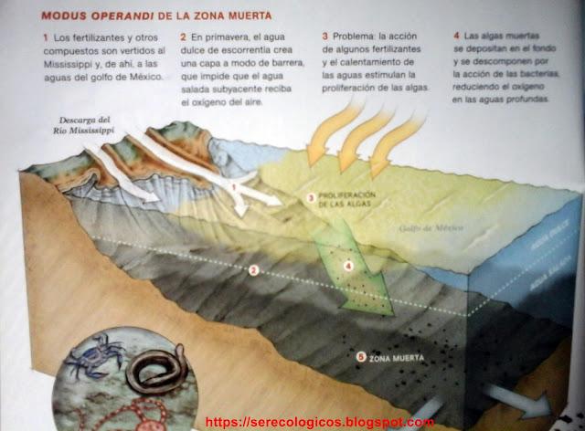 Las zonas muertas, aguas mortíferas