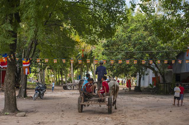 Hội đua bò Chùa Rô, An Giang