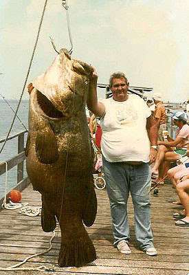 Big Fishes of the World: GROUPER GOLIATH (Epinephelus itajara)