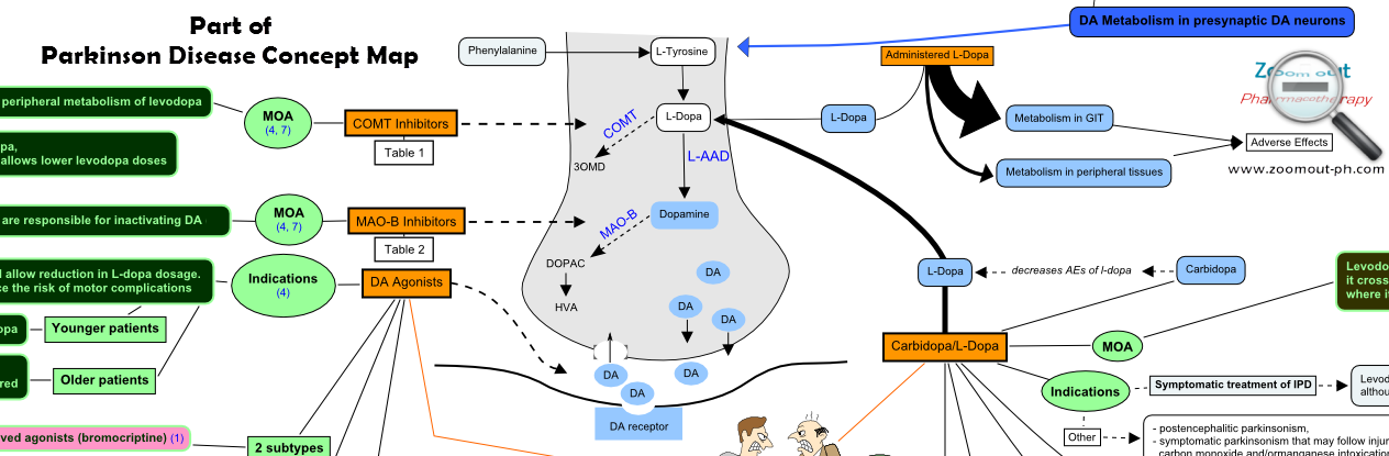 Dopamine metabolism and Antiparkinson drugs mechanisms of actions - Zoom out - Pharmacotherapy