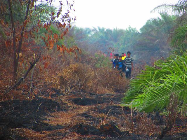 Kebakaran Lahan Kelapa Sawit di Desa Dayun Kec. Dayun 2015