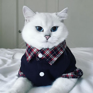 coby kucing ganteng