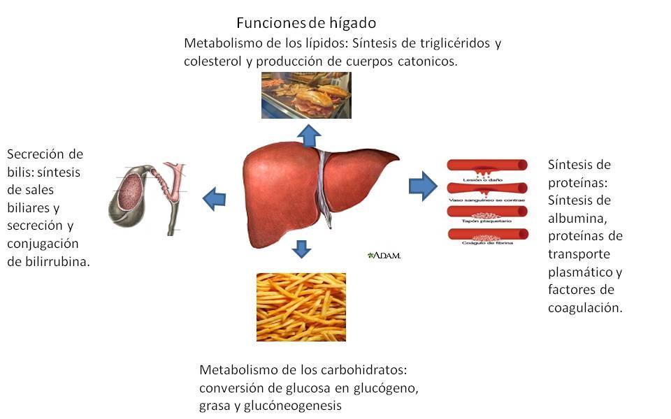 Genio Cómo determinar si necesita hacer realmente Booster de metabolismo