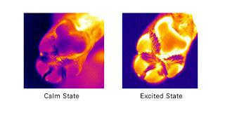 temperatura das patas de um cão