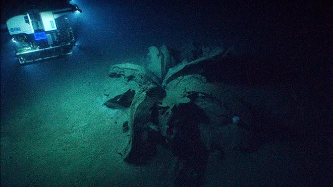Ученые, изучающие затонувшие корабли в Мексиканском заливе при помощи подводного робота, обнаружили на дне массу, напоминающую продукт извержения глубоководного вулкана, передает издание KHOU. Сначала исследователи сочли объект останками еще одного корабля, но как только робот подошел ближе, стало ясно, что затвердевшая масса — это излитие нефтяной смолы, которая затвердела, соприкоснувшись с водой.«Смоляные лилии», вид сверху. ©  Мексика Научная Экспедиция с 10 апреля по 1 мая 2014