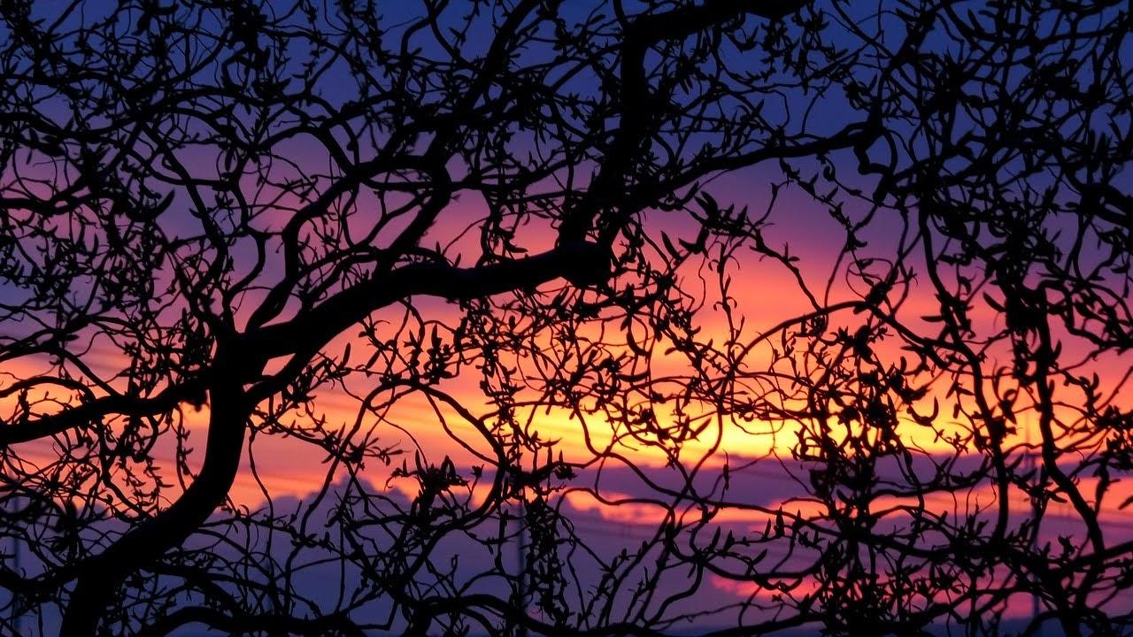 صورة تشابك اغصان الاشجار وقت غروب الشمس - اجمل واحلى صور الطبيعة الجميلة والخلابة في العالم