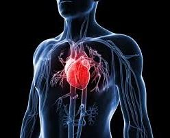 www.Ada Beberapa Makanan Sehat Yang Dapat Mencegah Terjadinya Penyakit Jantung