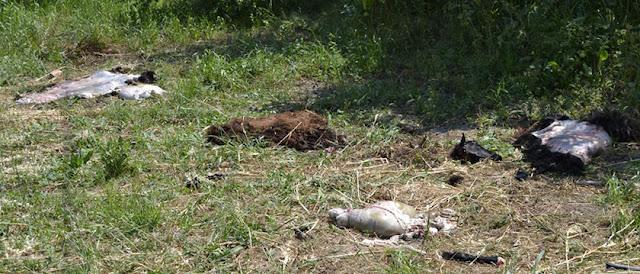 Έσφαξαν ζώα στον Αχέροντα και ότι απέμεινε τα πέταξαν στον ποτάμι για να τα ξεφορτωθούν (+ΦΩΤΟ)