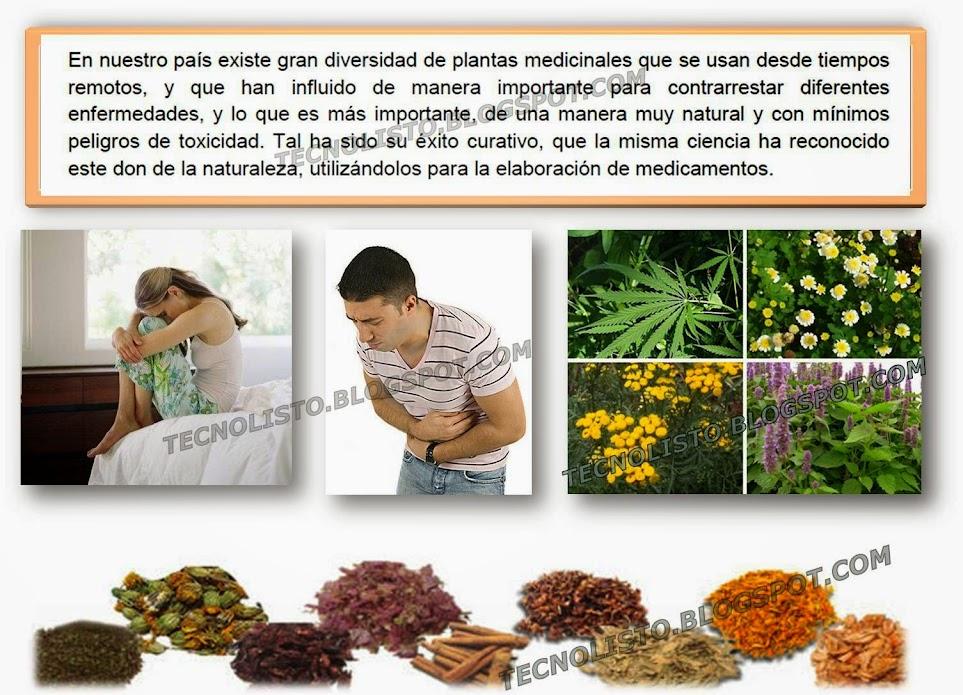 """""""Plantas medicinales usos"""""""