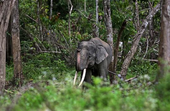 Akses menuju Taman Nasional Way Kambas