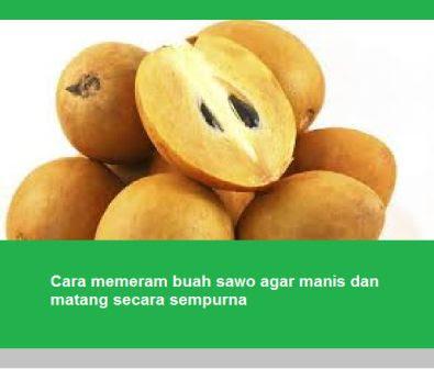 Cara memeram buah sawo agar manis dan matang secara sempurna