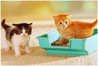 Cara Melatih Kucing Buang Air di Dalam Litter Box