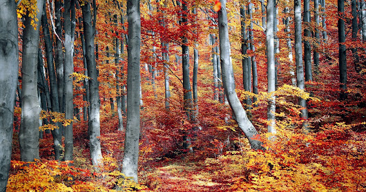Fall Foliage: Why Do Leaves Change Color?