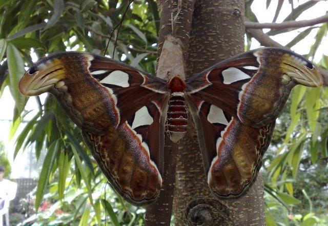 لماذا تمتلك الفراشات ألوان رائعة نابضة بالحياة؟