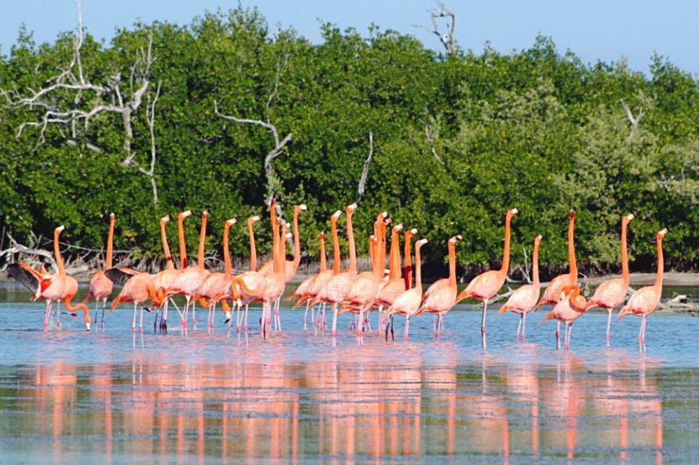 Campeche Messico Isla Arena di Calkini: Riserva della Biosfera di Uccelli