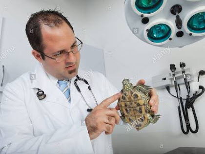 Daftar Dokter Hewan Indonesia