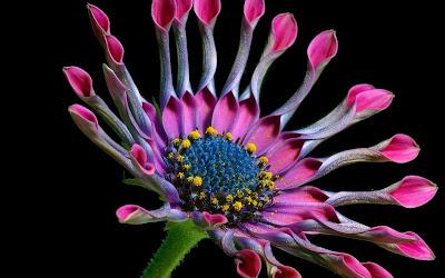 pink flower macro widescreen resolution hd wallpaper