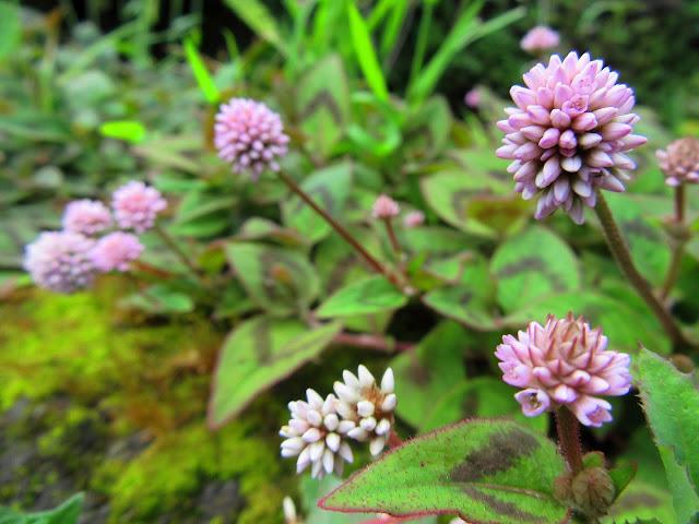 flowers that enchant