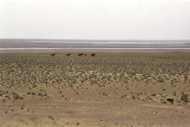 Ouzbékistan, Boukhara, chevaux, steppe, Amou-Daria, © L. Gigout, 2010