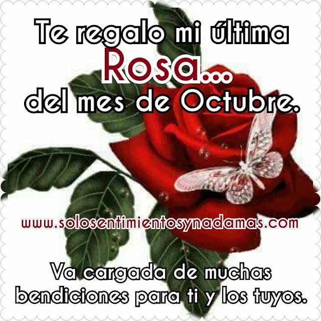 última rosa del mes de Octubre.