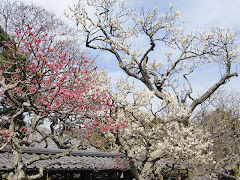 梅・東慶寺