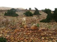 Apakah Atlantis Di Pantai Maroko?