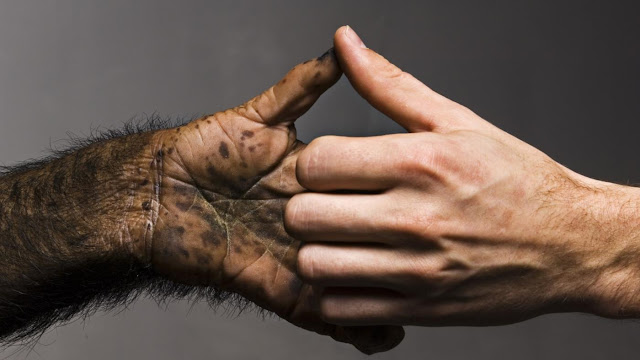 How evolution has equipped our hands with five fingers