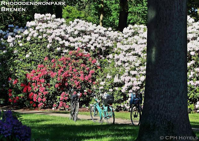 Rhododendron Park Bremen in der Blütezeit im Mai