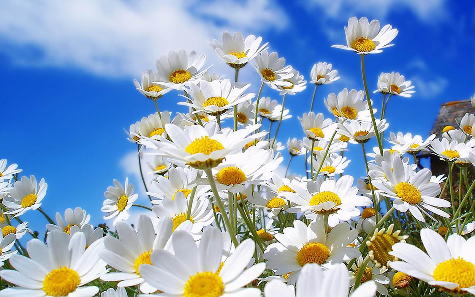 Spring Flowers For Desktop Wallpaper Best Hd Wallpapers