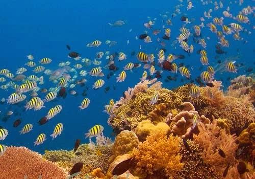 Pemandangan Bawah Laut Bunaken, pantai, gunung, wisata keluarga, candi, pemandangan, Tempat Wisata Terindah di Indonesia