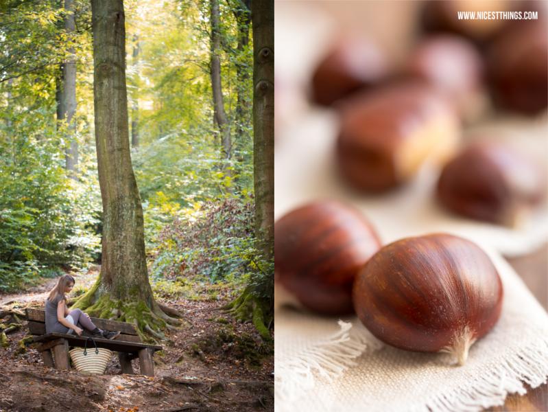 Maronen für Maronencreme Rezept im Wald sammeln