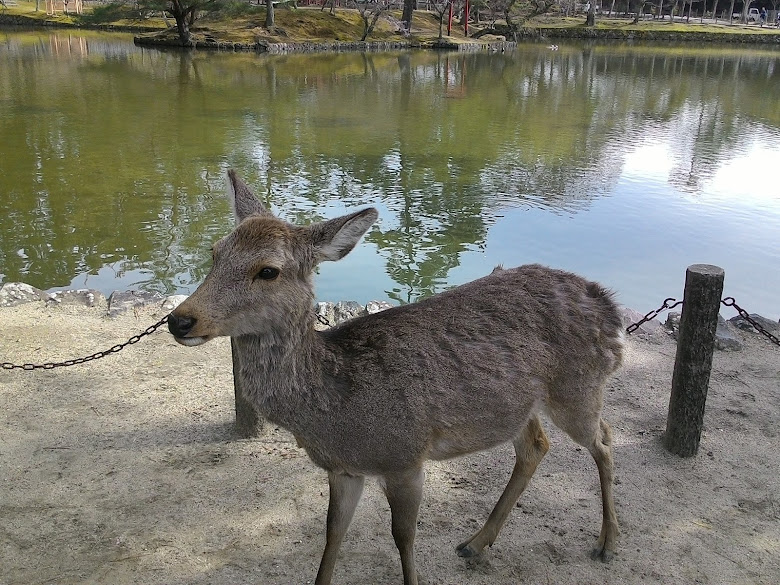 很有「禮貌」的鹿