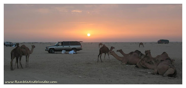 Camel farm outside Jeddah Saudi Arabia