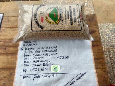 Benih Pesanan  H. CARMA Indramayu, Jabar.  (Sebelum Packing)