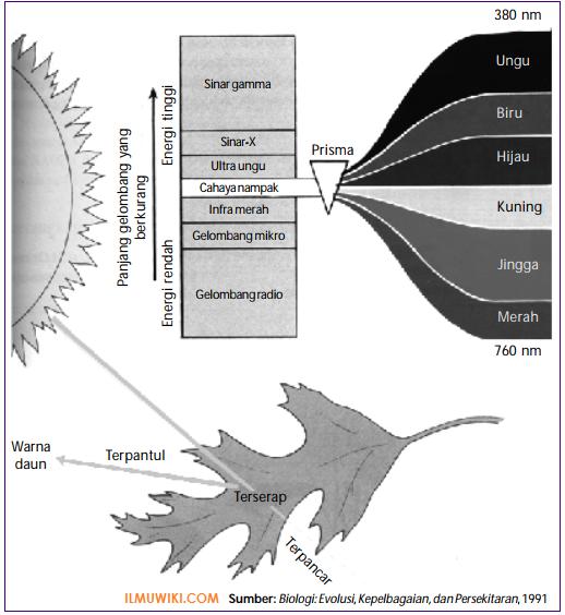 Cahaya matahari pada fotosintesis