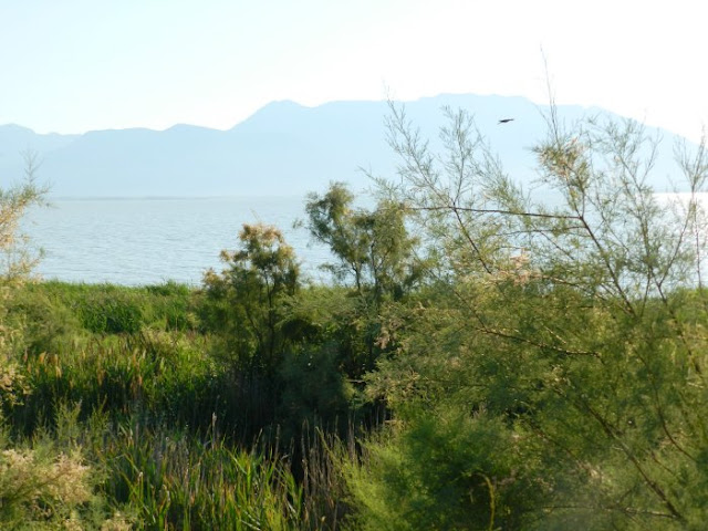 Utah Lake Shore in Summer
