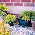 5 نباتات يجب أن تكون في منزلك