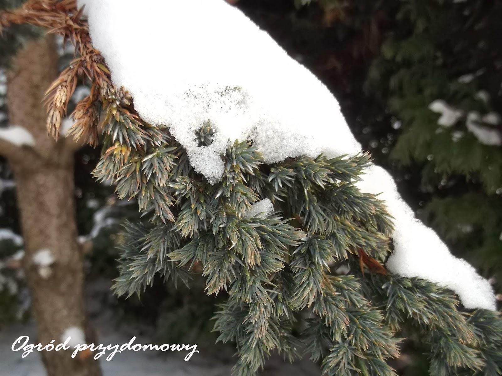 śnieg w ogrodzie, ogród przydomowy