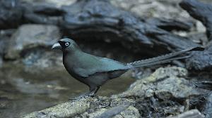Caraputu Com Media Refrensi Harga Burung Mp3 Burung Perawatan Burung Kicau Murai
