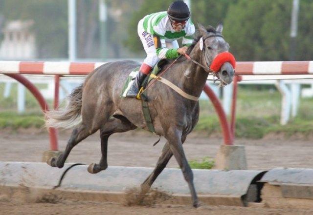 Conwy Rider Stripes La Plata