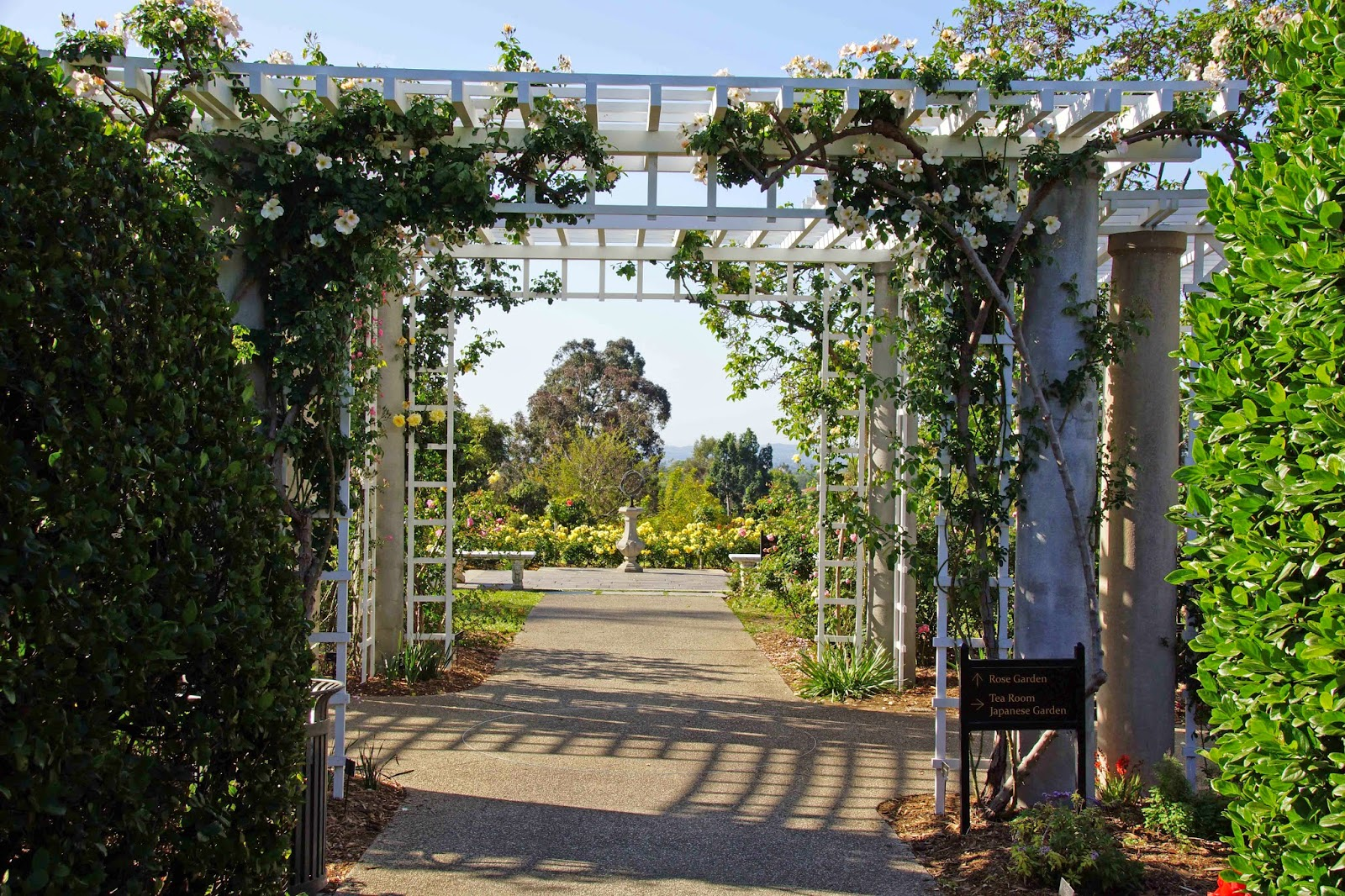 stupendous garden archway. The stupendous mass planting of  Iceberg and Brilliant Pink there on the right Huntington Rose Garden 2015 Spring Flush